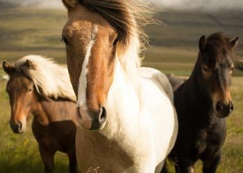 Learn more about horse vaccines